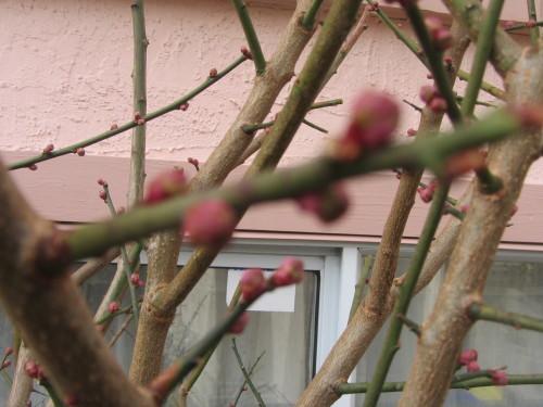 春はもうここに_a0173527_07243772.jpg