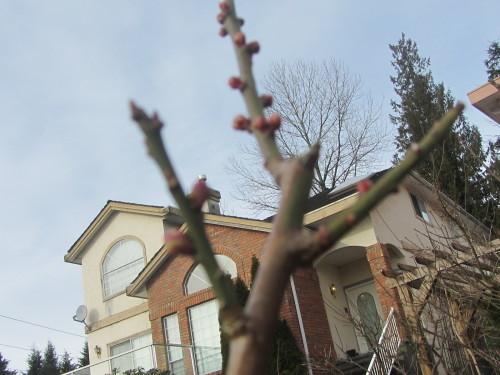 春はもうここに_a0173527_07272850.jpg