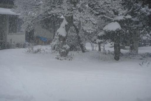 また雪の話題ですが_e0226943_23490537.jpg