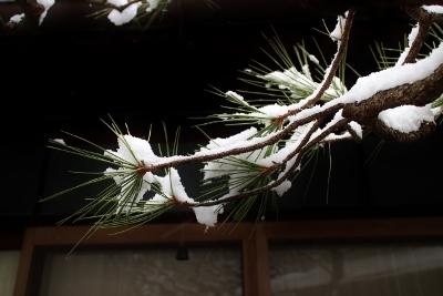 下鴨の初雪_a0279848_13583378.jpg