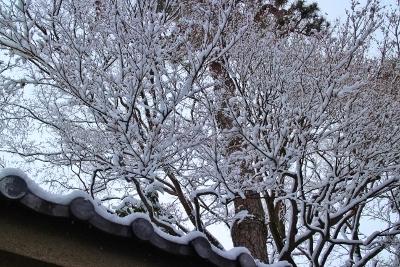 下鴨の初雪_a0279848_13585419.jpg