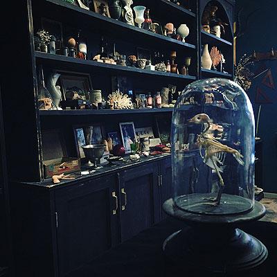 ガラスドームと全身骨格標本_f0247848_17392255.jpg