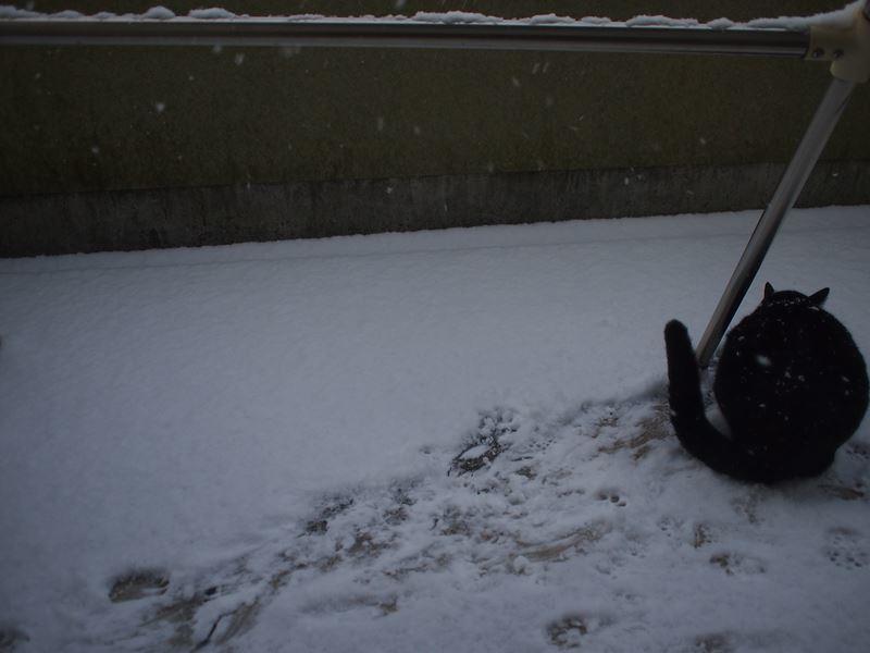 初雪_b0279058_21502086.jpg