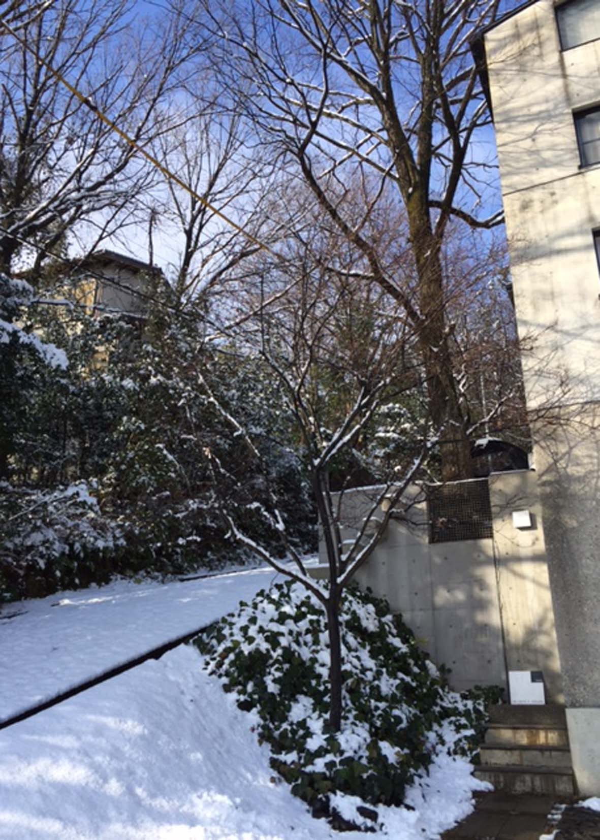 雪 1.20_e0215179_9463579.jpg