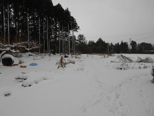今季初めての除雪車が通った。_e0036983_9285475.jpg