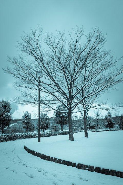 暖冬の雪景色_d0353489_21362215.jpg