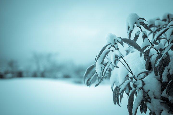 暖冬の雪景色_d0353489_21364040.jpg