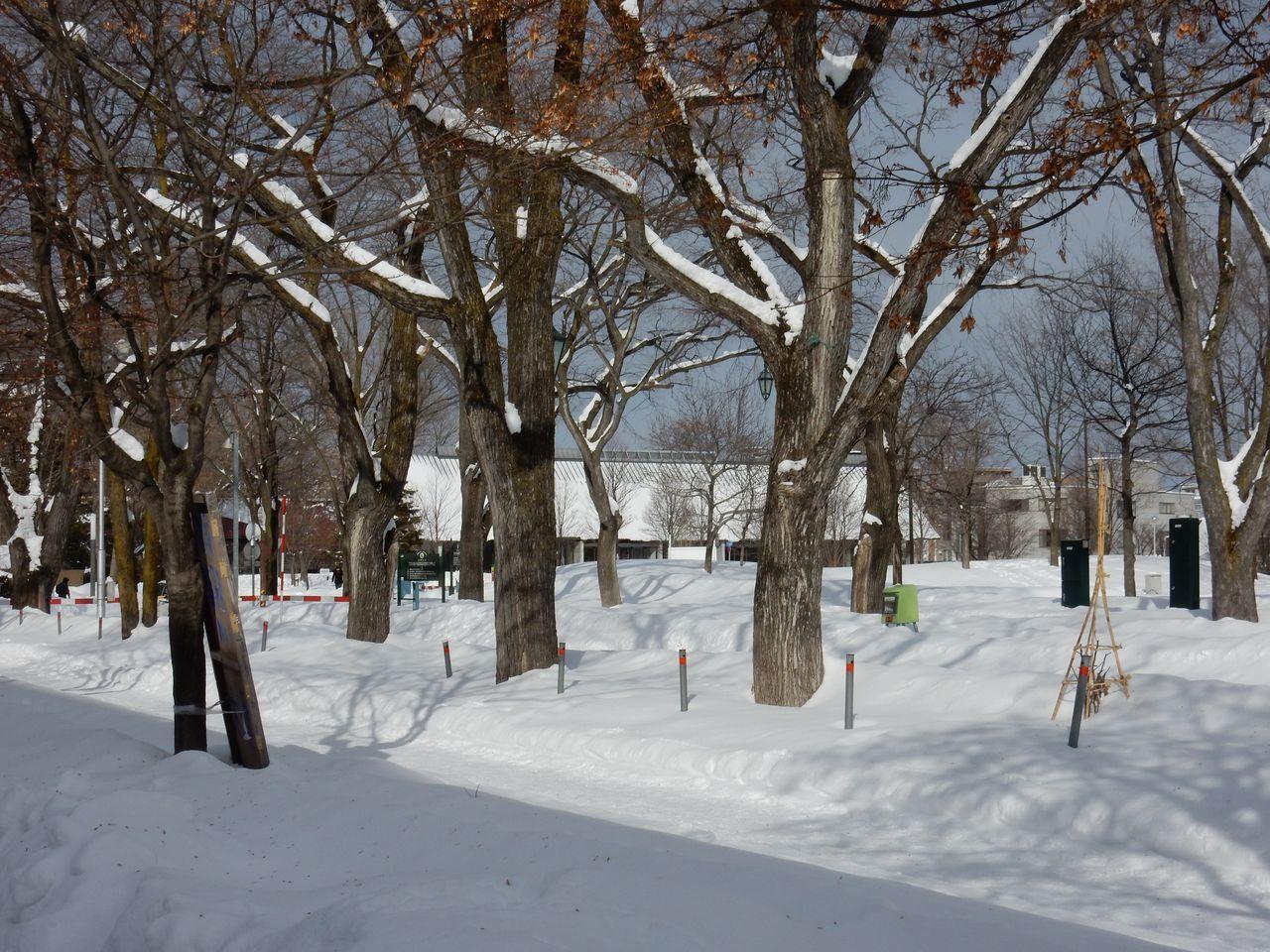 瞬間の冬晴れ_c0025115_18514291.jpg