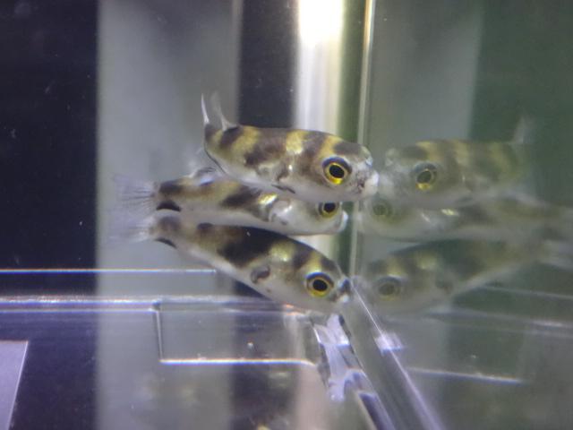 160121 熱帯魚・淡水魚・水草・観葉植物_f0189122_12564698.jpg