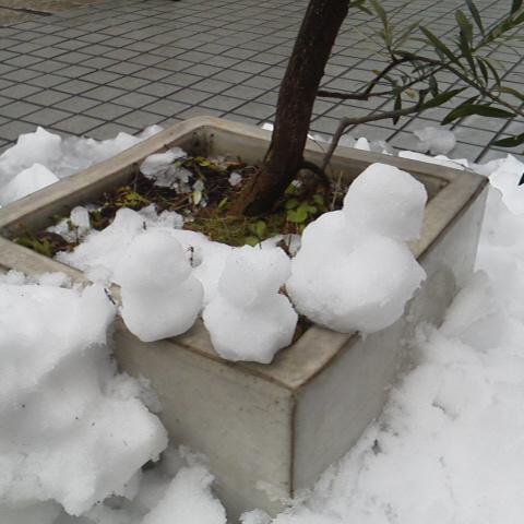 積雪_d0014133_5331320.jpg
