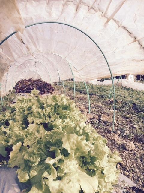 今年の大寒は今日です 冬野菜達も一番寒い日に元気だと 嬉しいもんです_c0222448_13362906.jpg