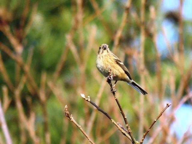 野鳥トレ 38 神戸森林植物園_b0227552_17505956.jpg