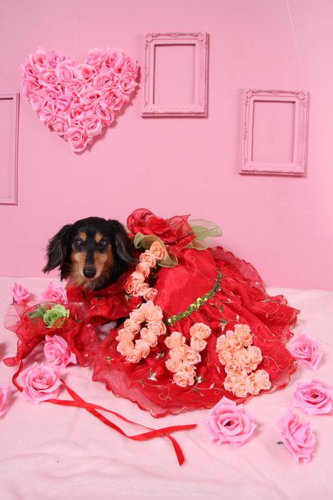 2016 St.Valentine day_c0134862_2113076.jpg