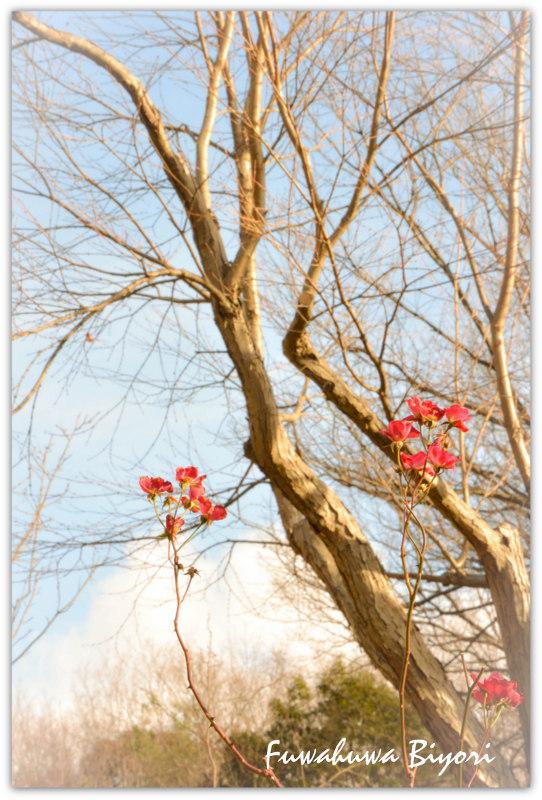冬の公園 vol.1_d0344864_19370758.jpg