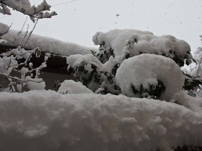 大雪 2_d0127876_2335224.jpg