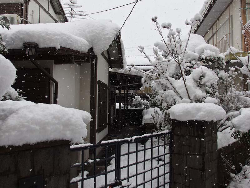 大雪 2_d0127876_2335595.jpg