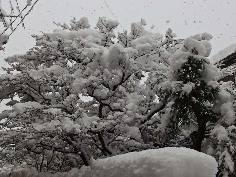 大雪 2_d0127876_2335842.jpg