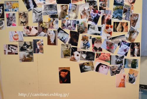 猫アイシングクッキー  Homemade Cat\'s Icyng Cookies_d0025294_19203376.jpg