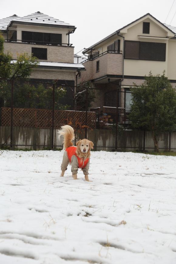 雪の日の朝_b0275998_10453095.jpg