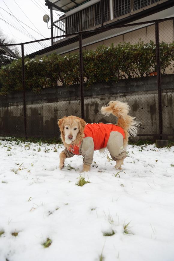 雪の日の朝_b0275998_104708.jpg