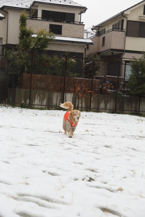 雪の日の朝_b0275998_10481079.jpg