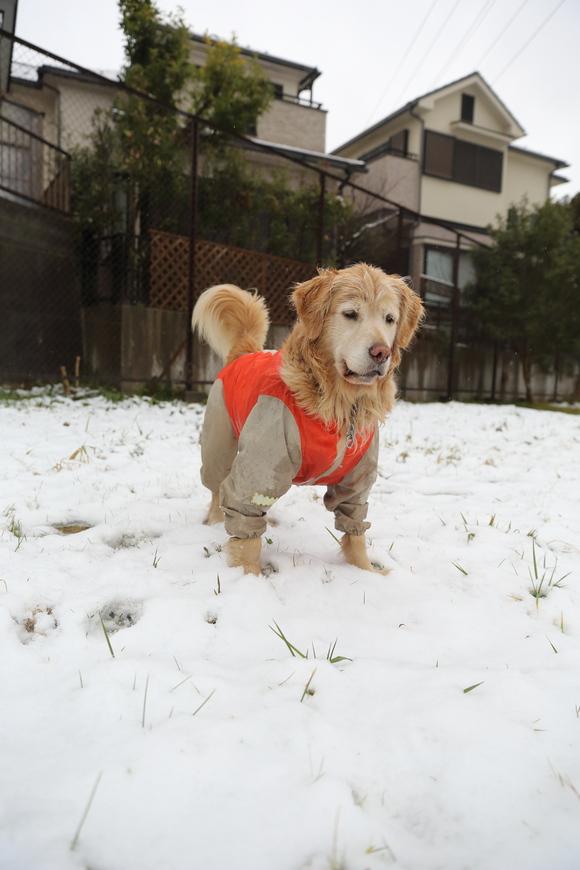 雪の日の朝_b0275998_10492282.jpg
