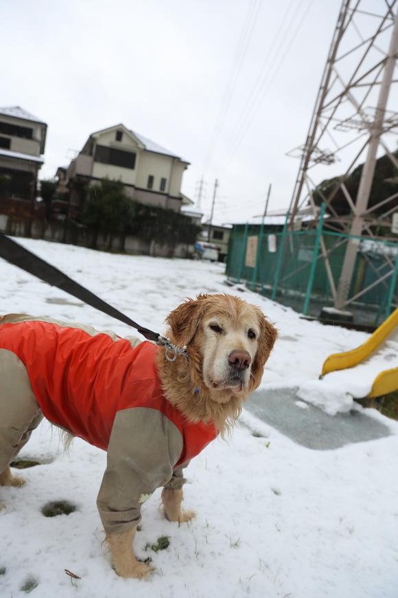 雪の日の朝_b0275998_10513794.jpg