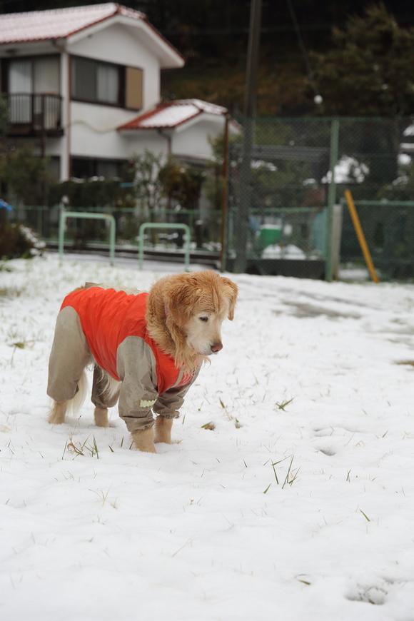 雪の日の朝_b0275998_1059877.jpg