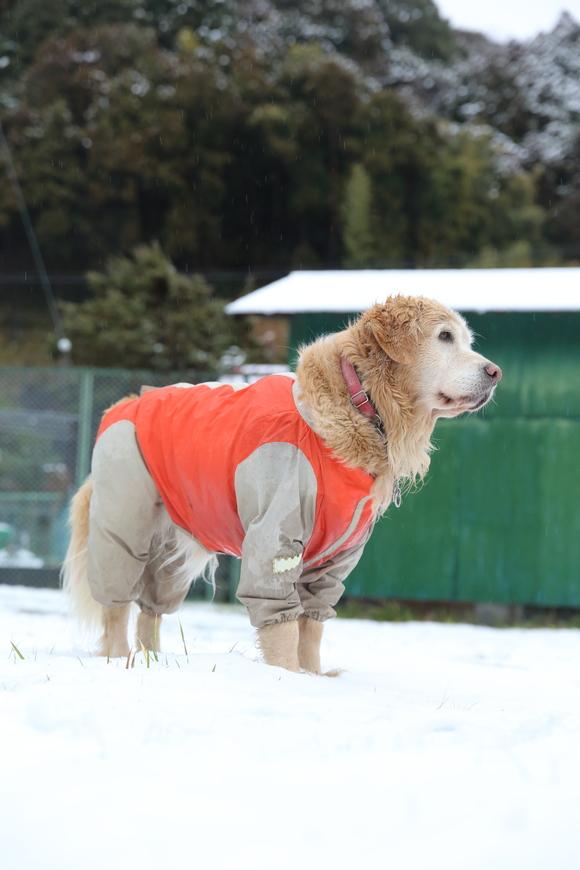 雪の日の朝_b0275998_1111443.jpg