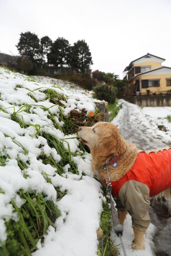 雪の日の朝_b0275998_1144113.jpg