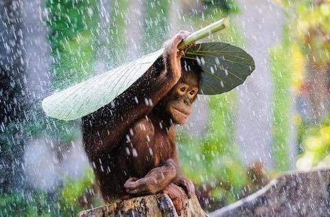 雨の日はやり過ごす_a0037910_12202620.jpg