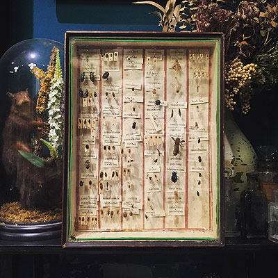 NEW ARRIVAL「虫の標本」_f0247848_19315224.jpg