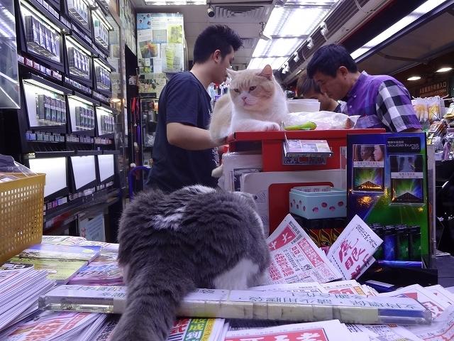 尖東忌廉哥 信和便利店店長 Part3 _b0248150_20140761.jpg