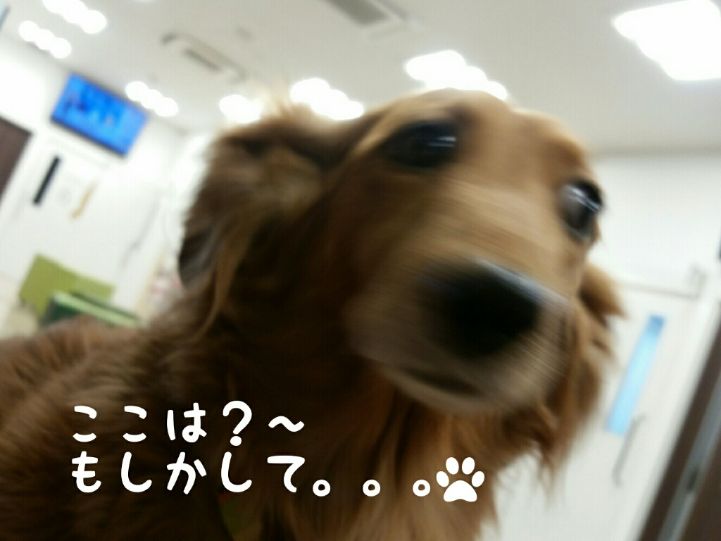 c0220065_22501543.jpg
