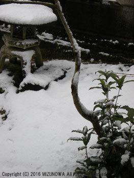 雪の日課_d0255366_14334742.jpg