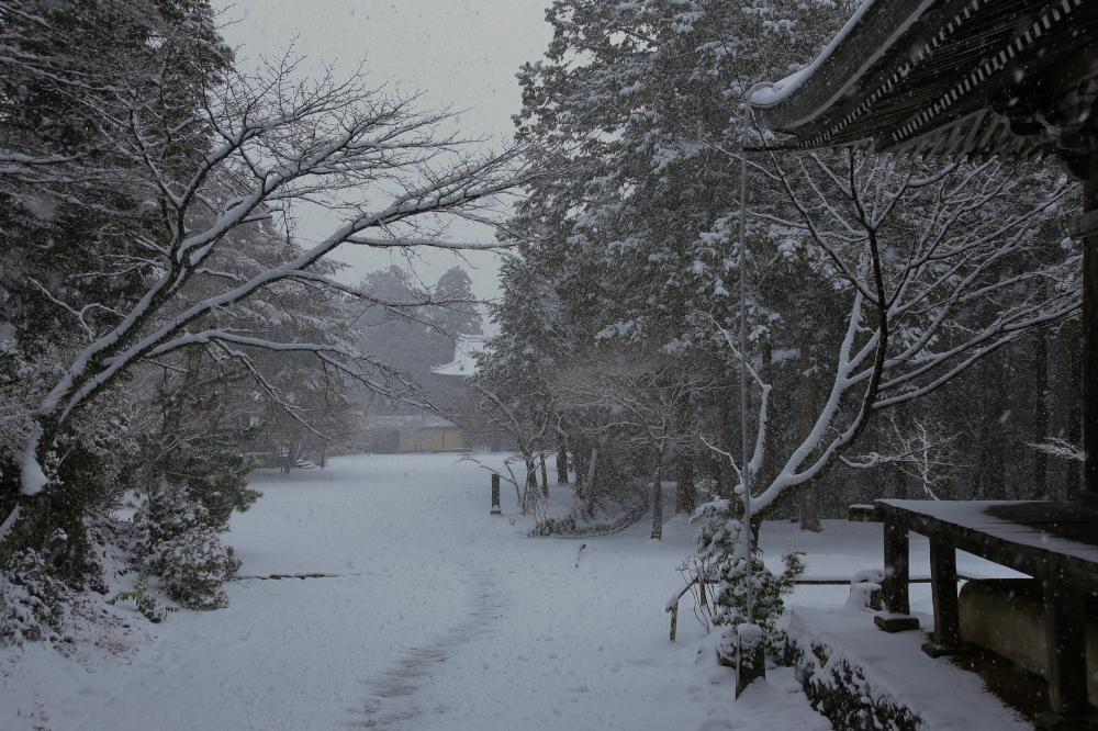 神護寺 雪景色 2016                     _f0021869_054682.jpg