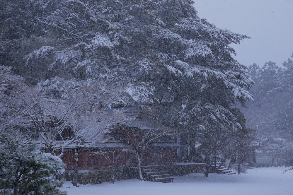 神護寺 雪景色 2016                     _f0021869_06332.jpg