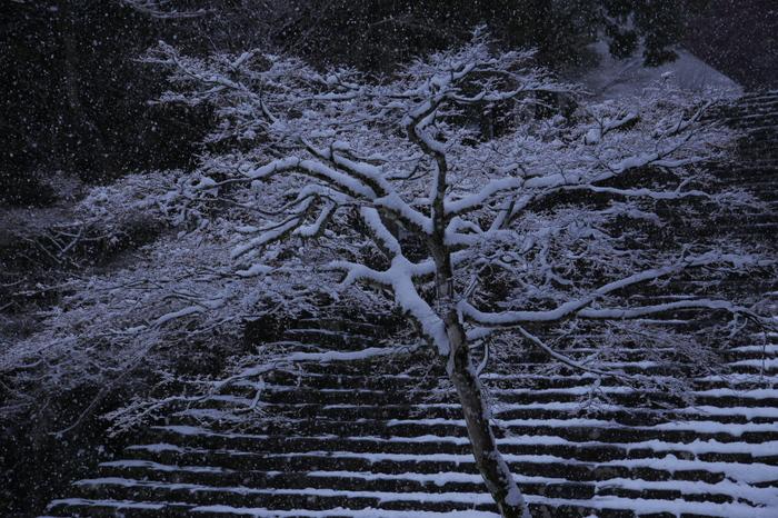 神護寺 雪景色 2016                     _f0021869_065682.jpg