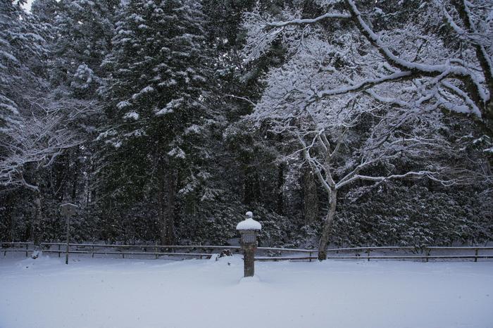 神護寺 雪景色 2016                     _f0021869_09452.jpg