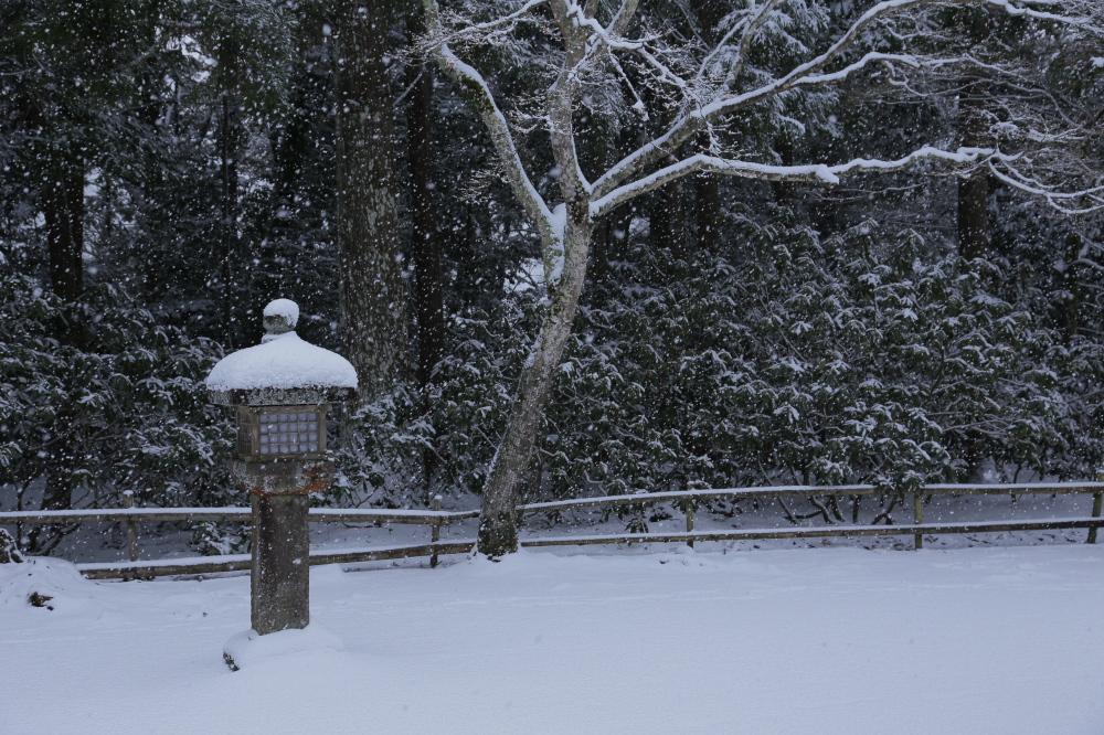 神護寺 雪景色 2016                     _f0021869_095925.jpg