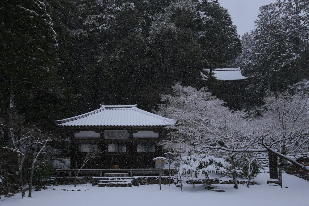 神護寺 雪景色 2016                                 _f0021869_23482965.jpg