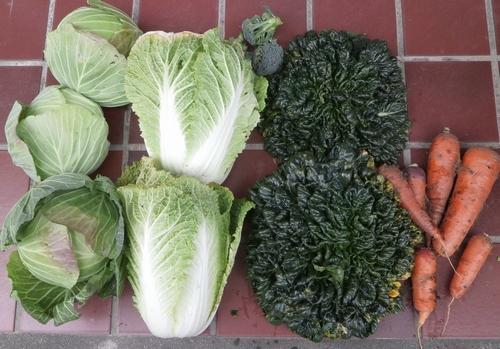 今年の春は野菜のトウ立ちが心配_f0018078_19204369.jpg
