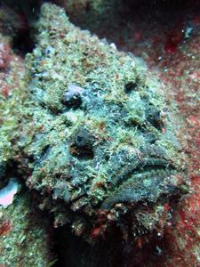 初インド洋で♪_f0144385_18581374.jpg