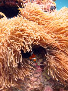 初インド洋で♪_f0144385_19102911.jpg