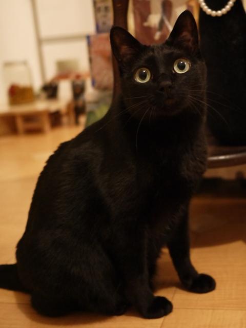 お誕生日猫 のぇる永遠の5歳編。_a0143140_212759100.jpg
