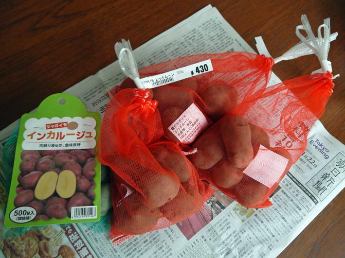 レッドムーンの種芋購入、キャベツなどに追い肥:1・22~23_c0014967_1813459.jpg