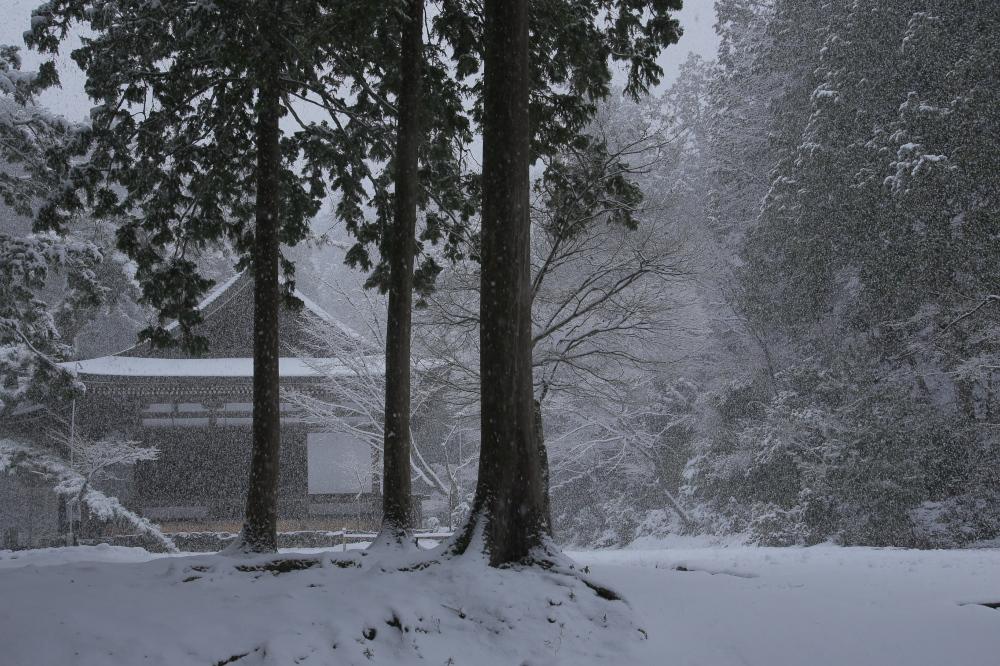 神護寺 雪景色 2016                                 _f0021869_2314582.jpg