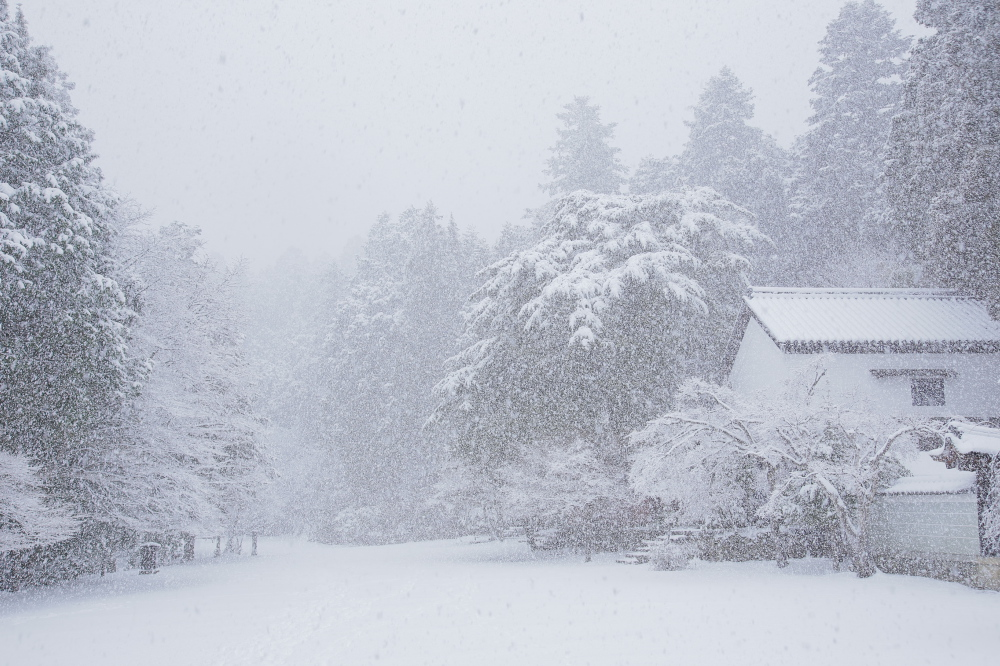 神護寺 雪景色 2016                                 _f0021869_23203070.jpg