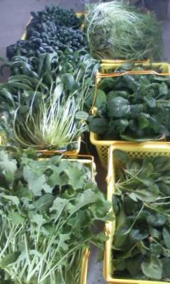 ハウス野菜の収穫。_d0026905_11232260.jpg