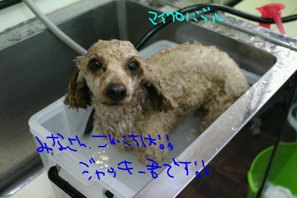 ドラマ_b0130018_21135758.jpg